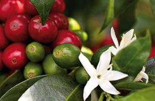 Umweltfreundlich Kaffee genießen - mit Jura
